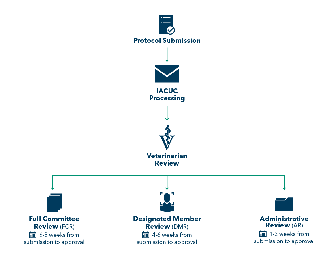 Flowchart of Protocol Review Process and Timeline